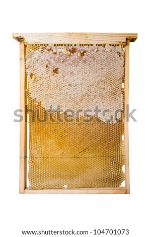 fresh honey in comb texture on white background