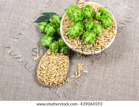 Fresh hops and barley grain on canvas background. #439064593