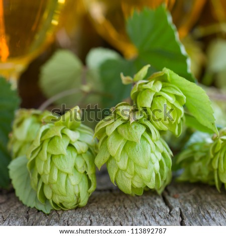 Fresh hops with beer