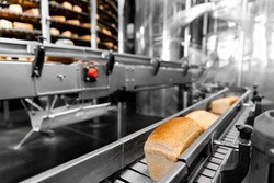 Fresh hot baked breads on automated production line bakery. Manufacture industrial.