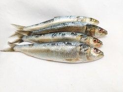 Fresh Indian oil sardines (Sardinella longiceps) Isolated on White Background.