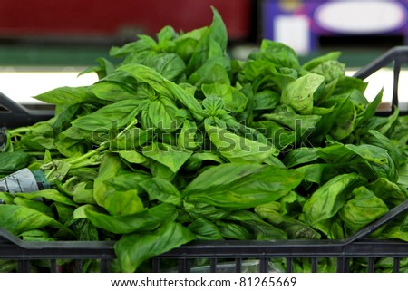 Fresh italian aromatic basil from Liguria coast