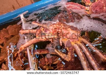 Fresh Japanese hair crab, King Crab of Hokkaido, Japan , Fresh Red King Crab #1072463747