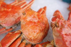 Fresh King Crab on ice at fish market in Japan. Taraba is name the king of crabs. Tasty, delicious and expensive. Hokkaido's famous seafood.Alaska crab.