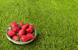 Fresh large strawberries in a wicker basket. Fruits and berries on the lawn with well-groomed grass. Light breakfast on the grass.