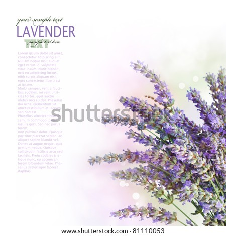 Fresh lavender flower border design over white background with bokeh lights