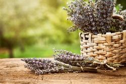 Fresh lavender. Lavender flowers on wood