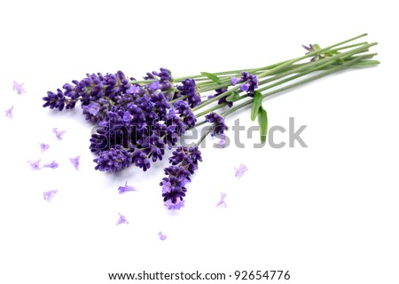 Fresh lavender on white ground