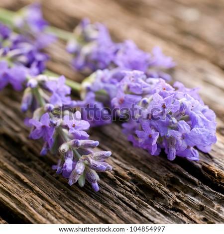 Fresh lavender on wooden ground