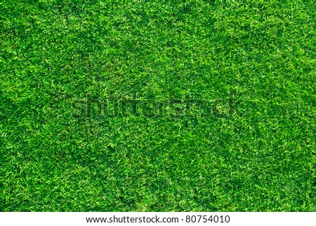 fresh lawn grass background for design work