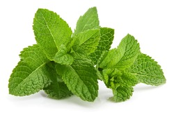 Fresh leaf mint green herbs ingredient for mojito drink, isolated on white background.