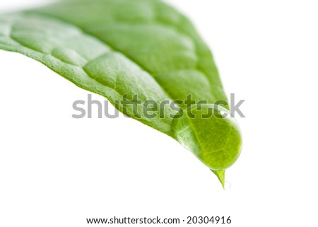 fresh leaf with water droplet