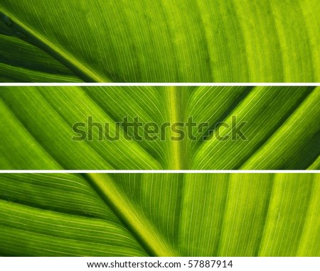 fresh leaves details