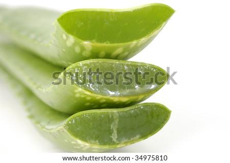 fresh leaves of aloe vera plant