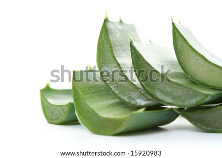 fresh leaves of aloe vera plant isolated on white