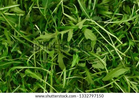 Fresh leaves of arugula as background. #1332797150