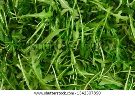Fresh leaves of arugula as background. #1342507850