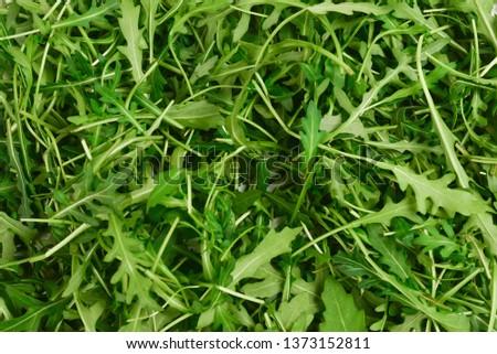 Fresh leaves of arugula as background. #1373152811