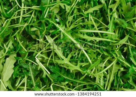 Fresh leaves of arugula as background. #1384194251