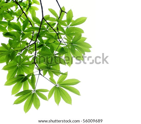Fresh leaves on white background