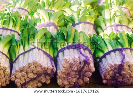 Fresh leek in net bags ready for sale. Harvest. Harvesting. Agriculture and farming. Freshly picked. Agribusiness. Agro industry. Growing Organic Vegetables
