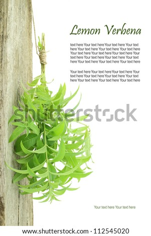 Fresh lemon verbena hanging from a rope with copy space