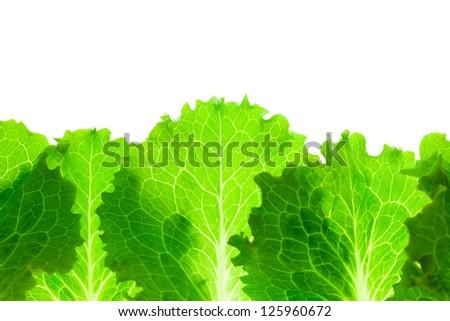 Fresh Lettuce Border /  leaves isolated on white background / macro - stock photo