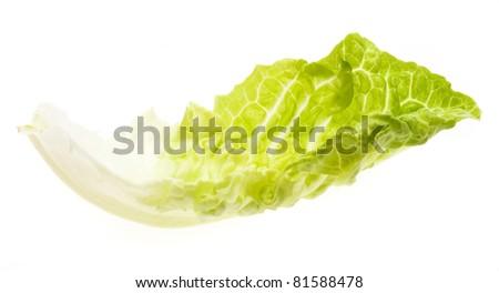 fresh lettuce isolated on a white background - stock photo