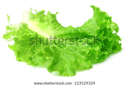 Fresh lettuce over white background