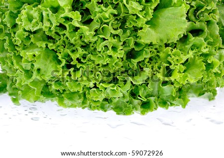 fresh lettuce white background