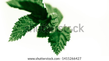 Fresh light green leaves isolated on white, abstract background for spring summer concept.