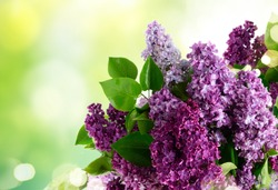 Fresh lilac flowers twig over garden background with copy space