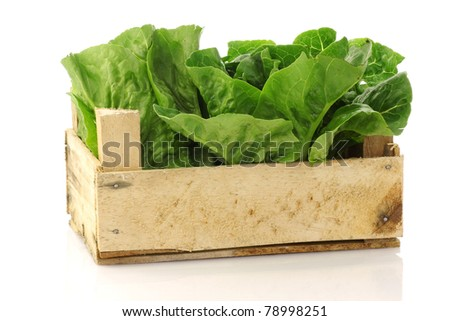 "fresh ""little gem"" lettuce in a wooden crate on a white background"