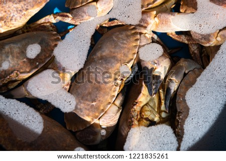 Fresh live crabs in a water basin. #1221835261