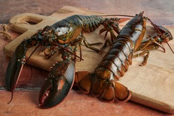 Fresh lobsters ready to be cooked, on wooden background