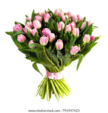 Fresh, lush bouquet of pink tulips isolated on white #791947423