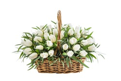 Fresh, lush bouquet of white tulips for present isolated on white background. Wedding bouquet