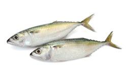 Fresh Mackerel fish (Decapterus) isolated on white background