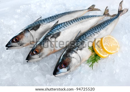 Fresh mackerel fish (Scomber scrombrus) on ice