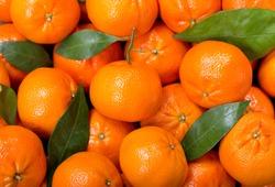 Fresh mandarin oranges fruit or tangerines with leaves,  as background