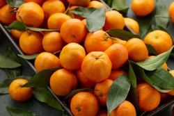 Fresh mandarin oranges with leaves, close up view. Seasonal fruits.
