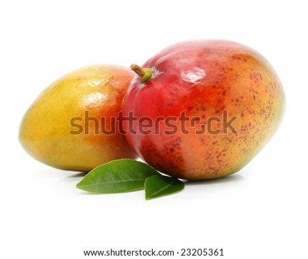 fresh mango fruits with green leafs isolated on white background