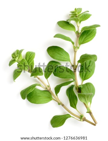 fresh marjoram herb isolated on the white background, side view Stock photo ©