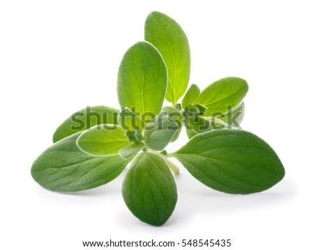 Fresh Marjoram (Origanum majorana), tops, close up. Clipping paths, shadows separated Stock photo ©