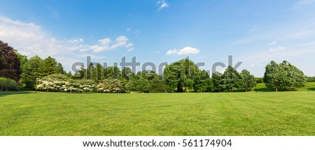 Fresh meadow landscape.