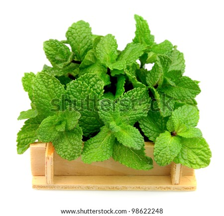 Fresh mint close up on a white background