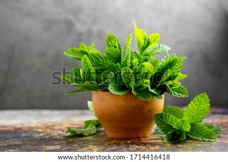 Fresh mint herb heap, green menthol leaves for mojito or summer cocktail Foto stock ©