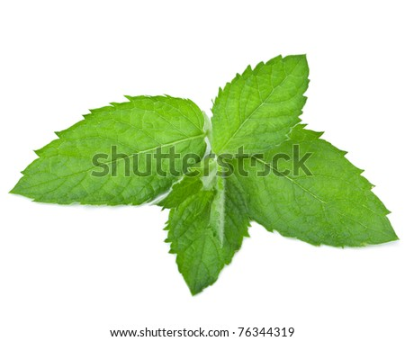 fresh mint leaf isolated