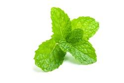 Fresh Mint leaf isolated on white background.