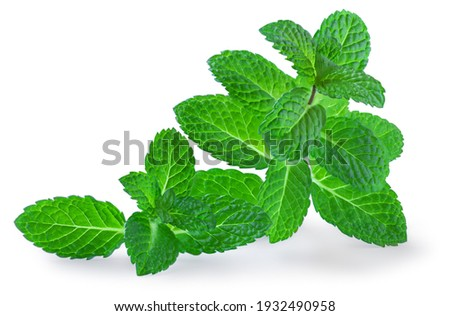 Fresh Mint leaf isolated on white background. Melissa, peppermint leaf close-up Foto stock ©